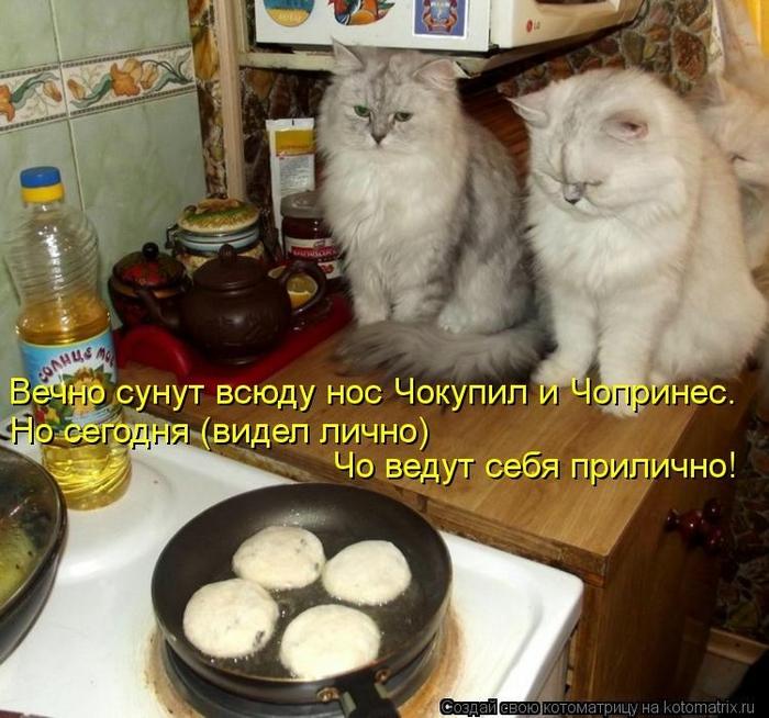 kotomatritsa_HM (700x654, 310Kb)