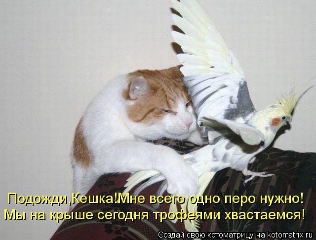 kotomatritsa_5e (640x486, 125Kb)