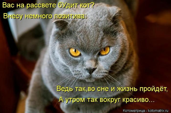 kotomatritsa_KR (700x465, 215Kb)