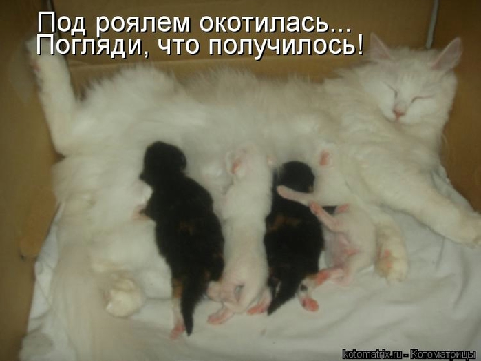 kotomatritsa_ozN (700x524, 162Kb)
