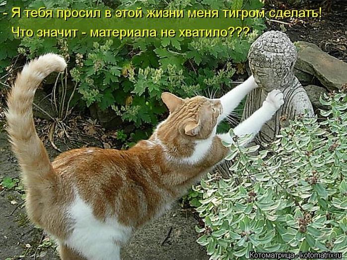kotomatritsa_Qz (700x525, 358Kb)