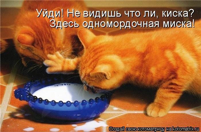 kotomatritsa_Vj (700x459, 170Kb)