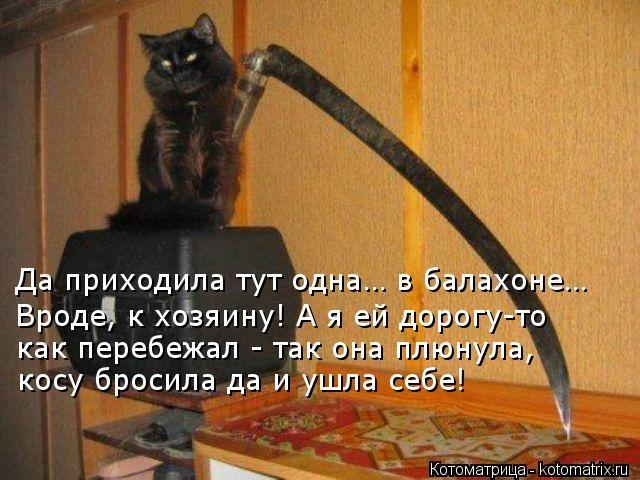 kotomatritsa_zz (640x480, 164Kb)