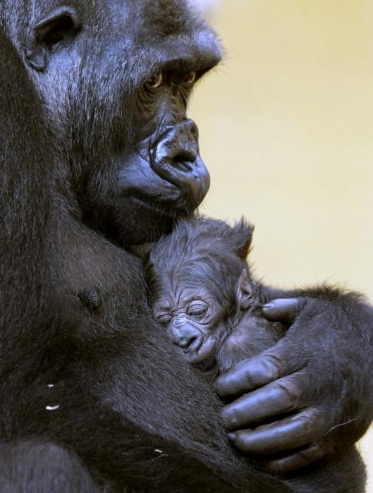 прикольные фото животных 14 (529x700, 243Kb)