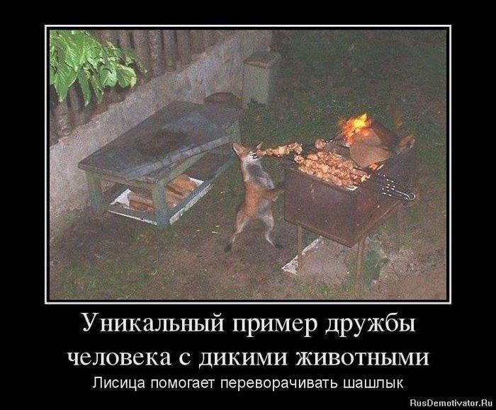 1371199309_89422852_unikalnyij-primer-druzhbyi-cheloveka-s-dikimi-zhivotnyimi (700x579, 80Kb)