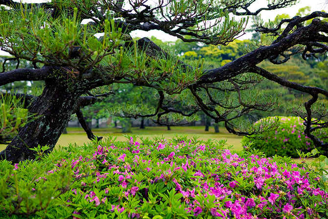 Японский замок Нидзё фото 18 (670x447, 753Kb)