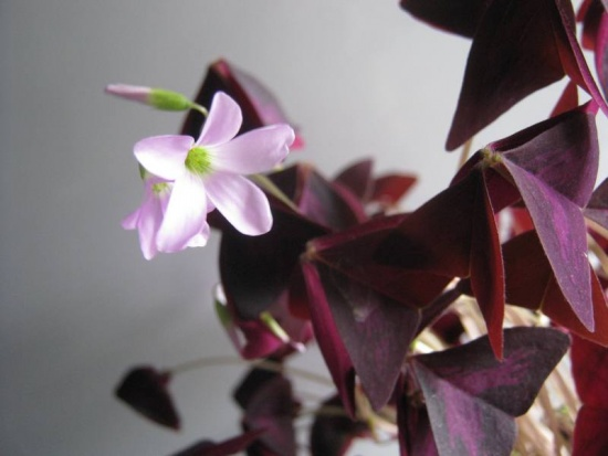 цветок бабочка.jpg1 (550x413, 55Kb)