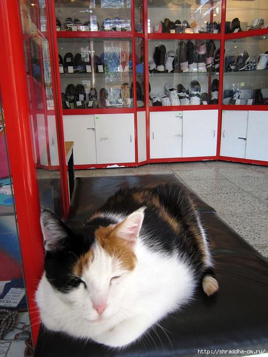 кошка в магазине (2) (525x700, 285Kb)