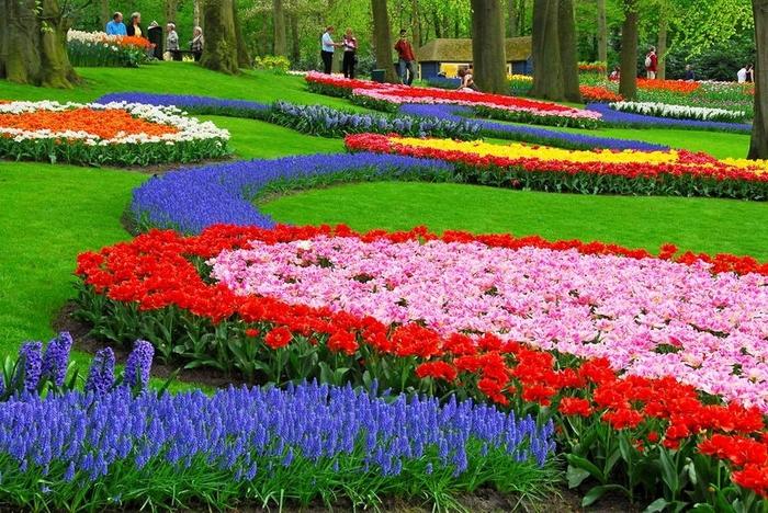 цветочный парк Кейкенхоф голландия 1 (700x468, 361Kb)