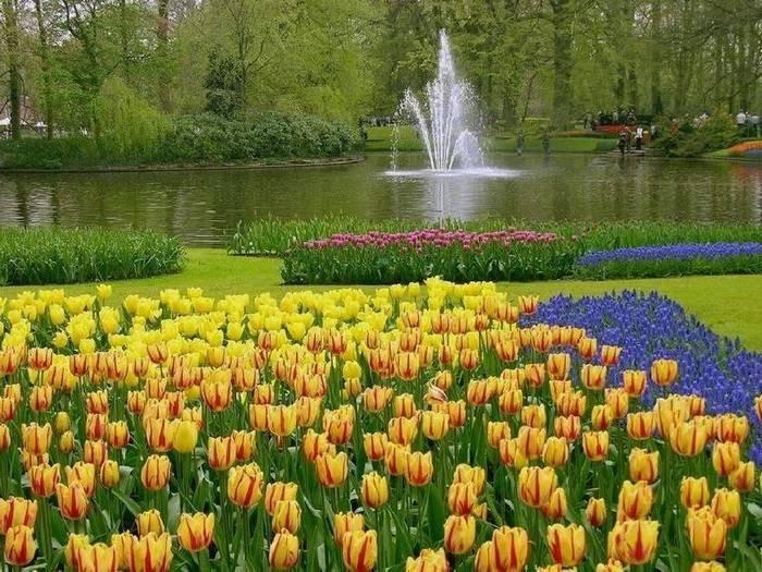 цветочный парк Кейкенхоф голландия 5 (700x525, 293Kb)