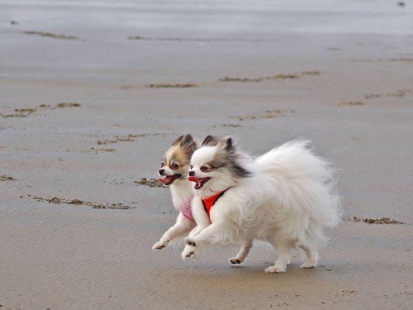собаки 1 (600x450, 127Kb)