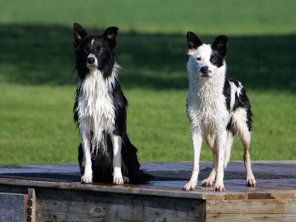 собаки 3 (600x450, 177Kb)