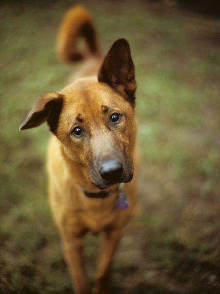собаки 5 (435x580, 137Kb)