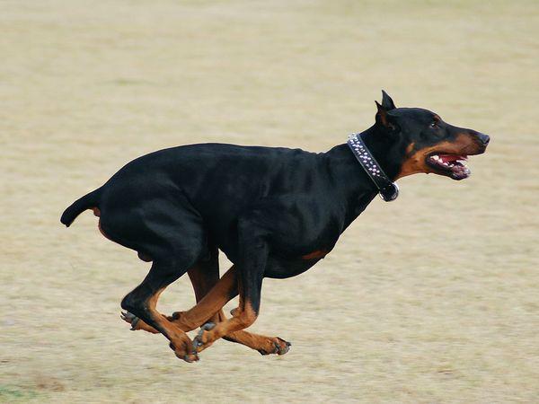 собаки 8 (600x450, 147Kb)