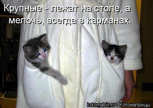 kotomatritsa_4p (500x356, 88Kb)