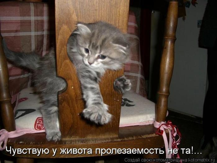 kotomatritsa_Dl (700x524, 218Kb)