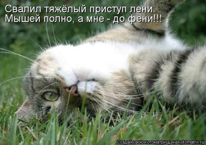 kotomatritsa_K8 (700x494, 229Kb)