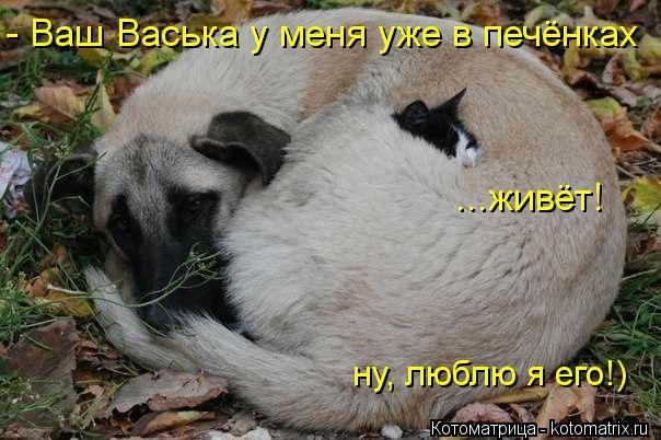 kotomatritsa_p (604x402, 127Kb)