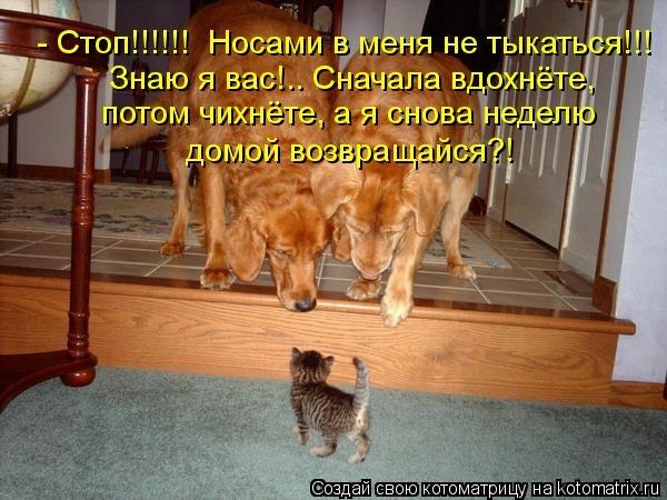 kotomatritsa_wI (600x450, 159Kb)