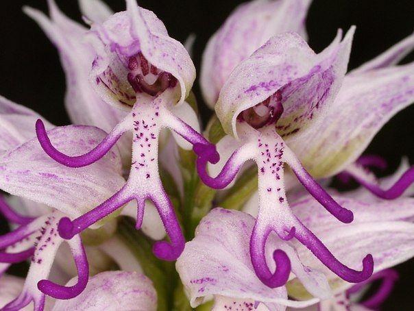 Великолепные и неповторимые орхидеи (604x454, 160Kb)