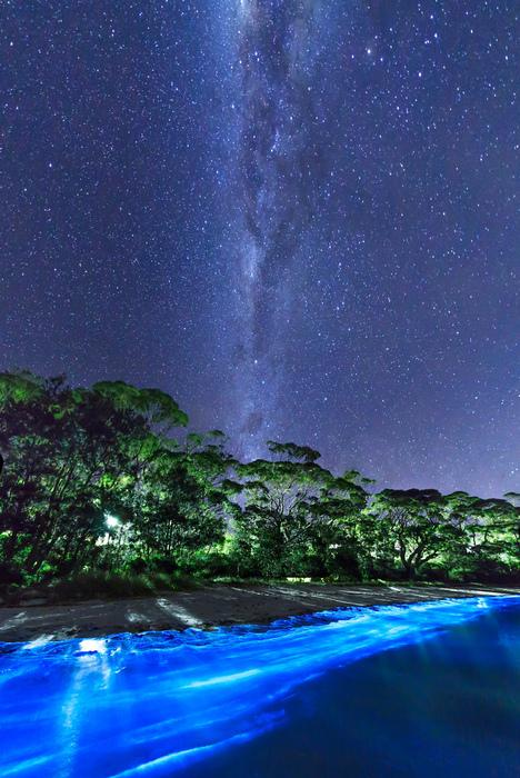светящийся планктон у побережья австралии фото (468x700, 261Kb)