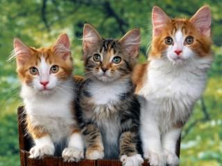 кошки (320x240, 26Kb)