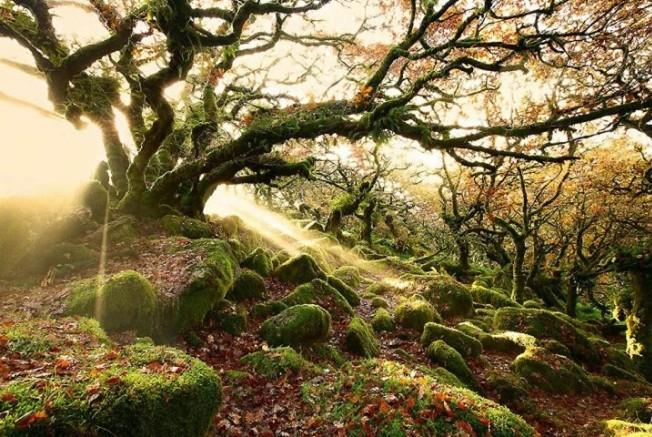 лес Англия (652x437, 418Kb)