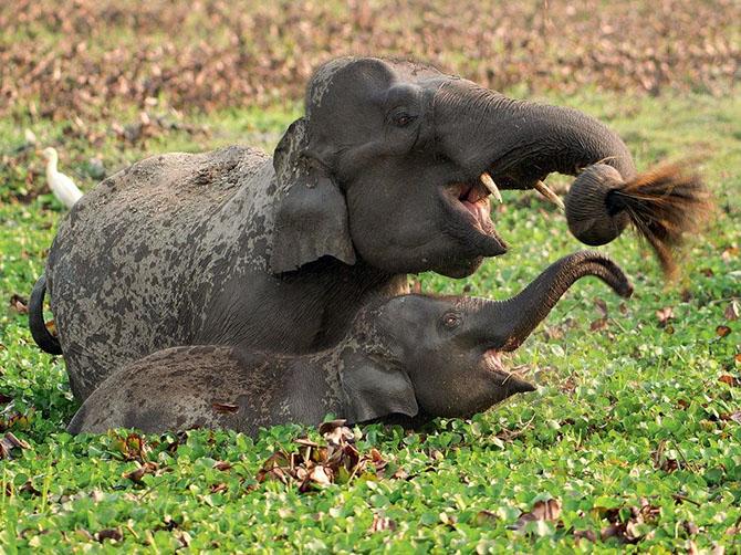 слон (670x502, 166Kb)