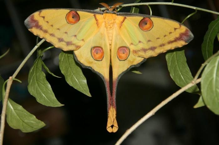 самая красивая бабочка фото 6 (699x464, 260Kb)