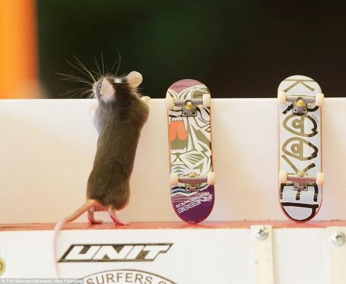 мыши фото (700x574, 174Kb)