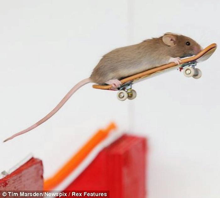 мыши фото 4 (700x630, 131Kb)
