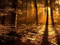 утро в лесу (550x487, 88Kb)