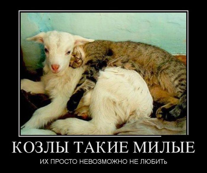875697_demotivatory_03_8 (700x586, 55Kb)