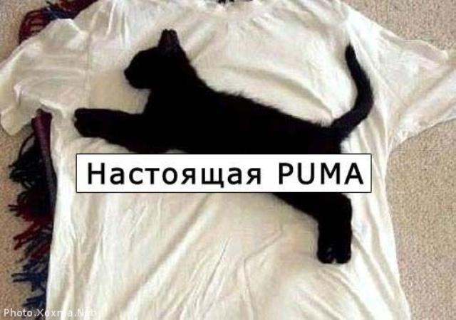 1205933799_prikol06 (640x450, 120Kb)