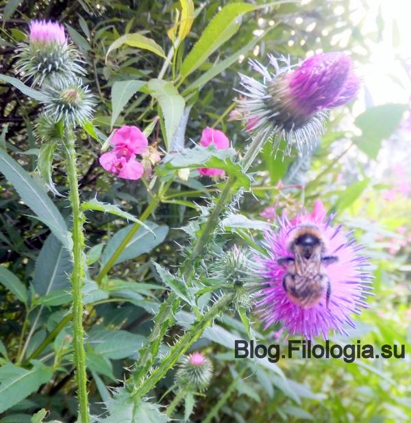 Шмель на цветке/3241858_leto15 (600x618, 324Kb)