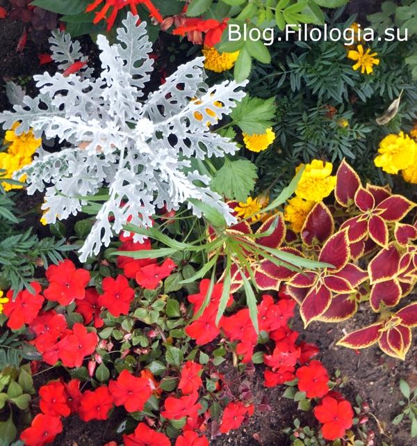 Цветы на улице/3241858_flowers7 (600x641, 394Kb)