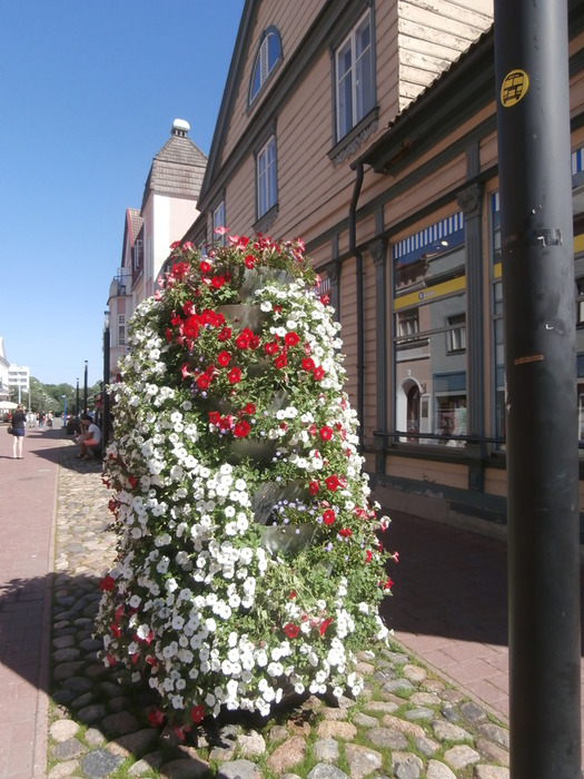 городские цветы фото: