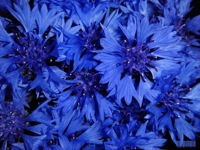 Сьесные блюда синего цвета