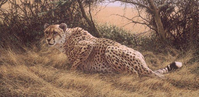 животные в картинах художников Эрик Уилсон 4 (680x331, 196Kb)