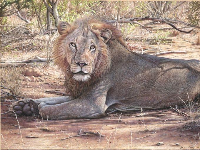 животные в картинах художников Эрик Уилсон 8 (680x511, 263Kb)