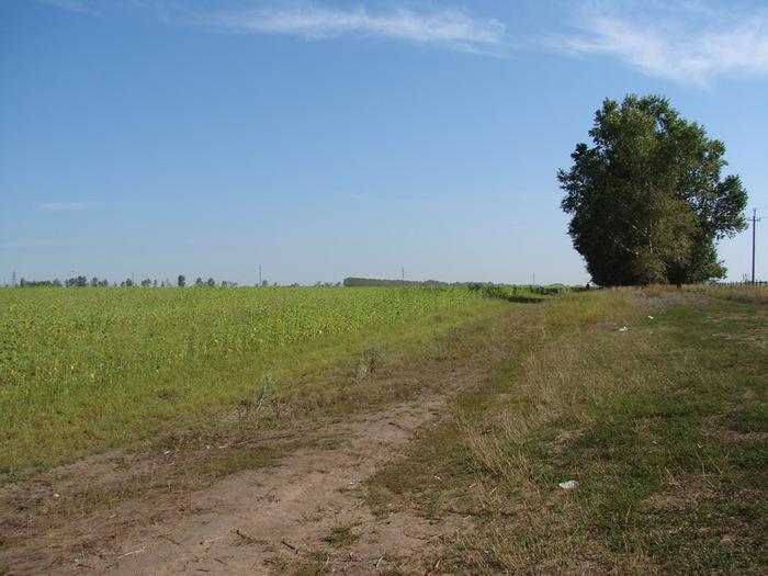 Поля и лесополосы/1415502_DSC00078_kopiya (700x525, 140Kb)