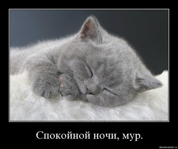 любимый спокойной ночи картинки