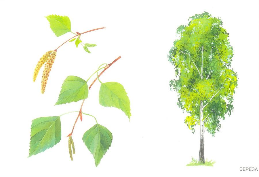 Картинки вишня для детей детского сада