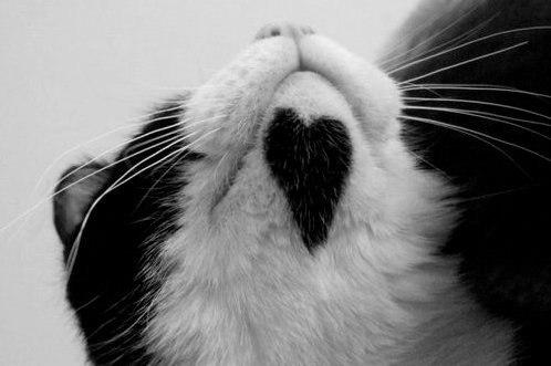 сердечные кошки1 (498x331, 62Kb)