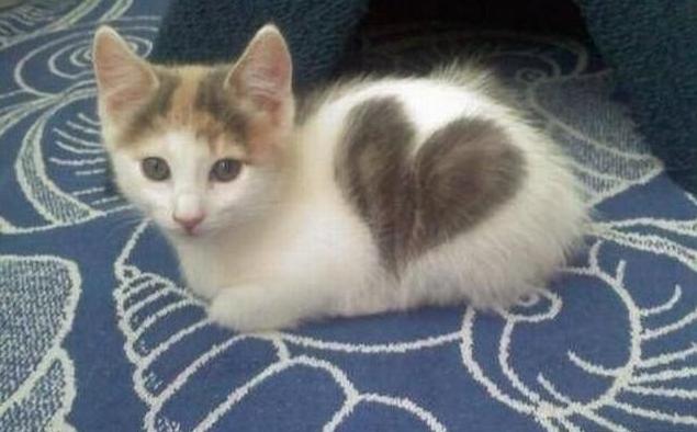 сердечные кошки3 (635x394, 333Kb)