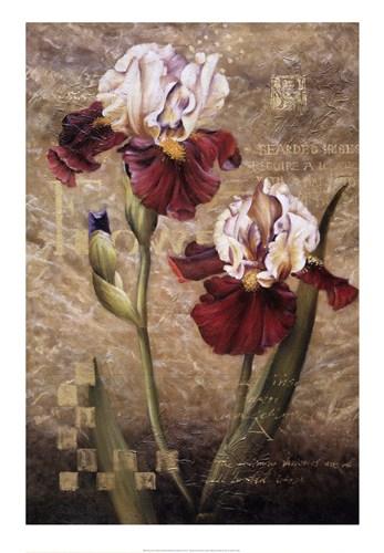 grand-irises-by-meng-56931 (347x500, 158Kb)