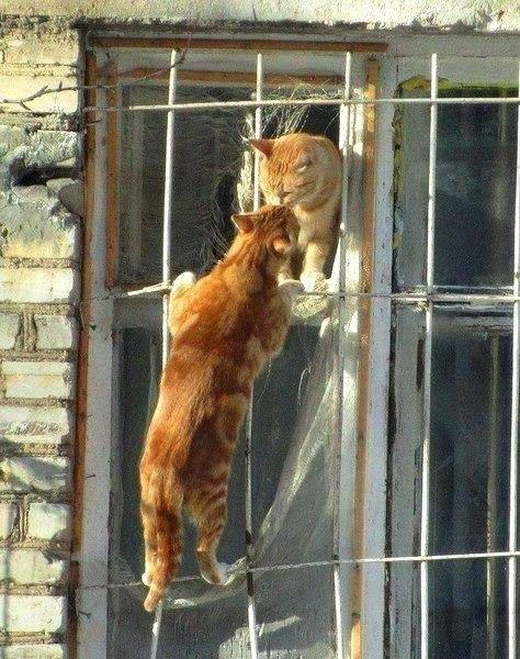 Ах, какая любовь!
