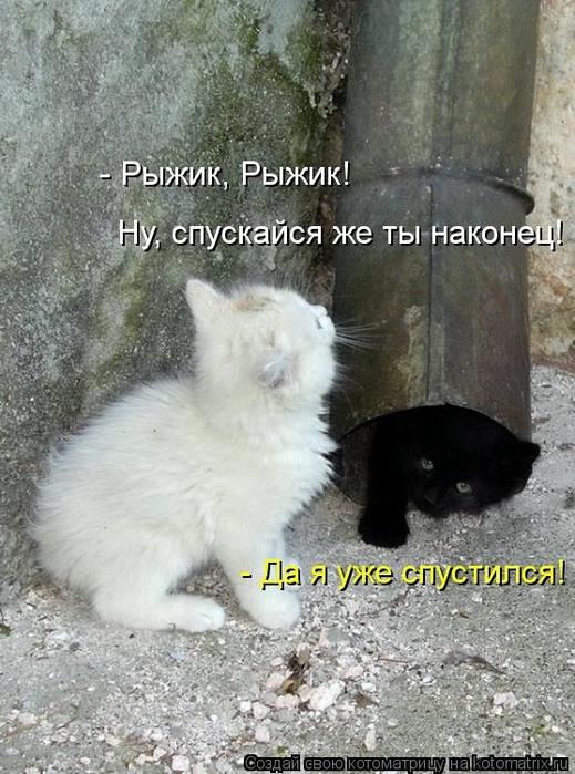 kotomatritsa_IaD (519x700, 286Kb)