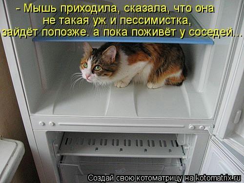 kotomatritsa_vd (500x375, 100Kb)