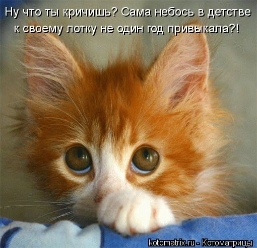 kotomatritsa_YF (510x493, 117Kb)